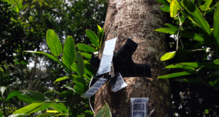 This team is helping to save the rainforest with audio technology